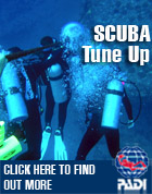 Advanced Open Water Training! Los Angeles Scuba Diving