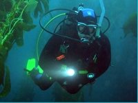 PADI Dive Master - Professional Scuba Instruction Los Angeles