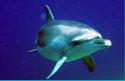 PADI scuba lessons dolphin